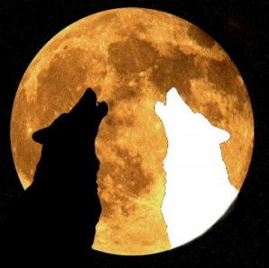 Les-deux-loups